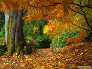 US_autumn-leaves-wallpaper.jpg